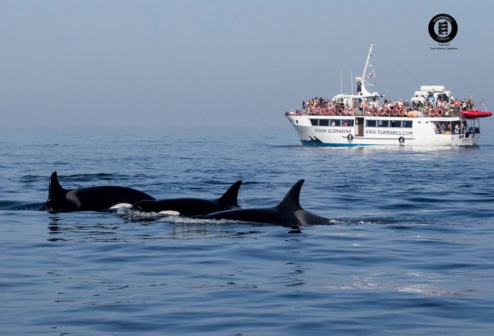 La observación de Orcas en el estercho