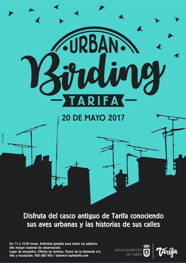 Urban Birding en Tarifa