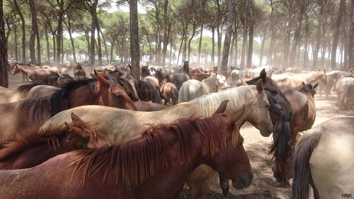El Pastorcito, zona de descanso