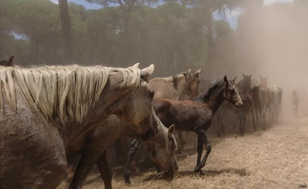 El camino. El potro deja de Doñana por primera vez