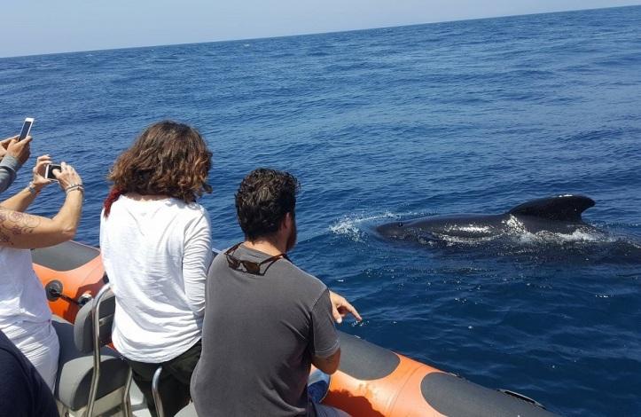 Avistamiento de ballenas y delfines en el estrecho de Gibraltar en una zodiac