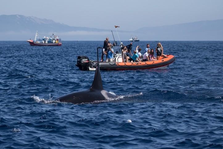 Momentos únicos con Top Tarifa whale watching