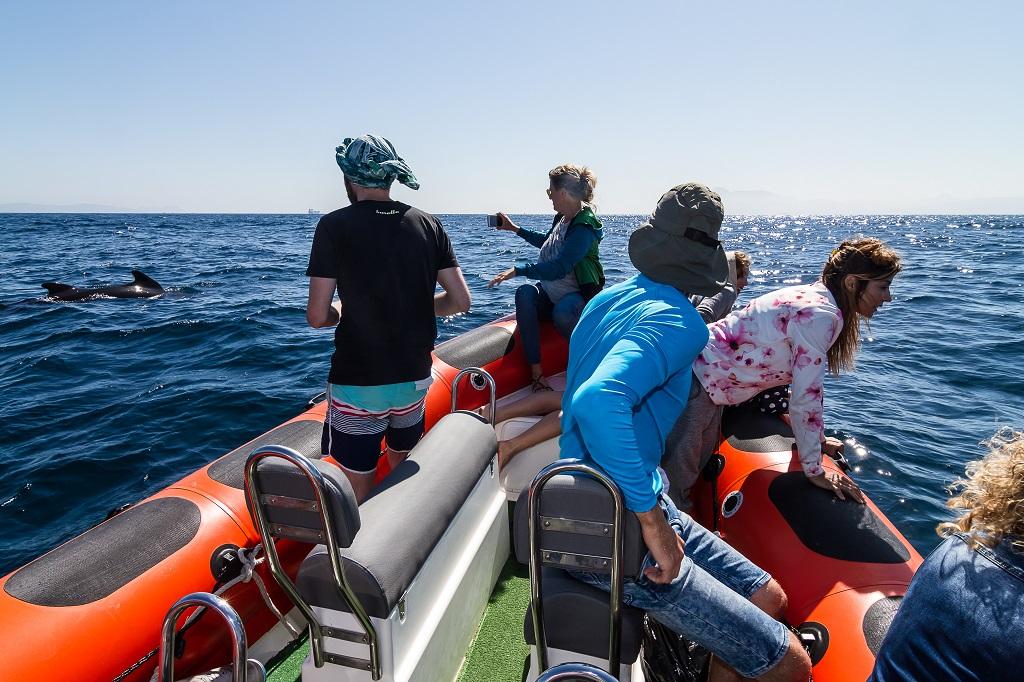 Seaobserver de Toptarifa avistamiento de ballenas en Tarifa