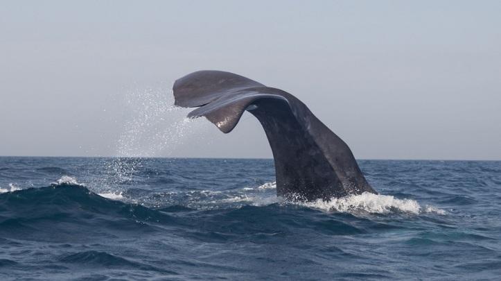Avistamiento de ballenas en navidad en Tarifa, sur de España whalewatch.tours