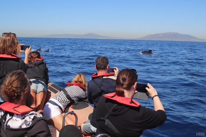 Avistamiento de ballenas en un zodiaco