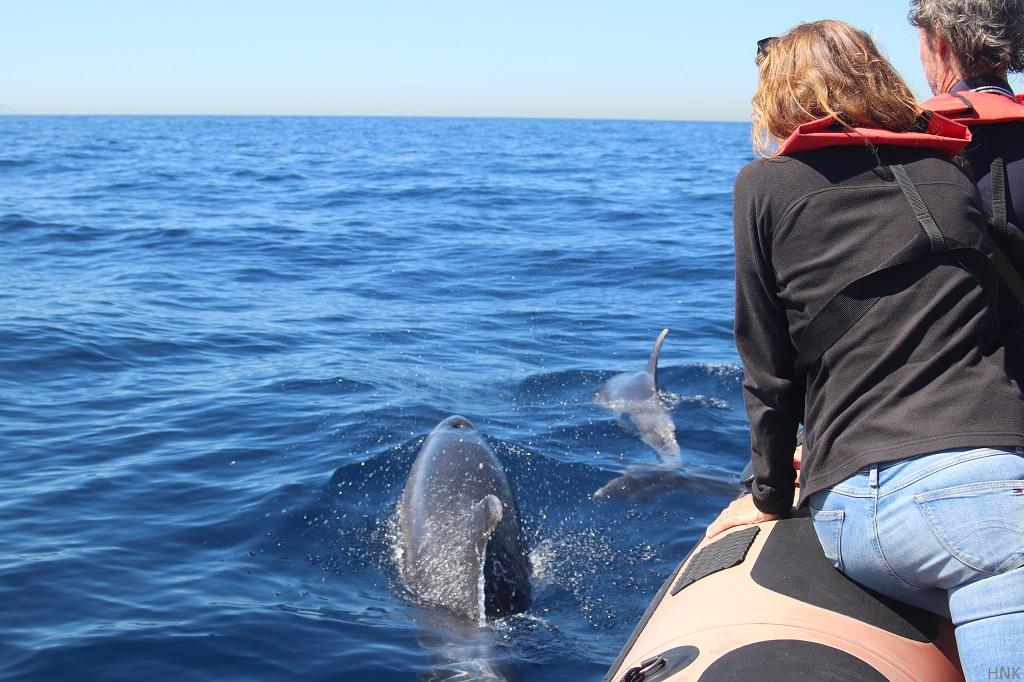 Avistamiento de ballenas y delfines en navidad en tarifa