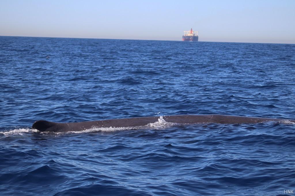 Ballenas en el estrecho foto hnk