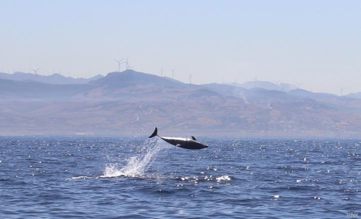 Delfin jugando foto hnk tarifa