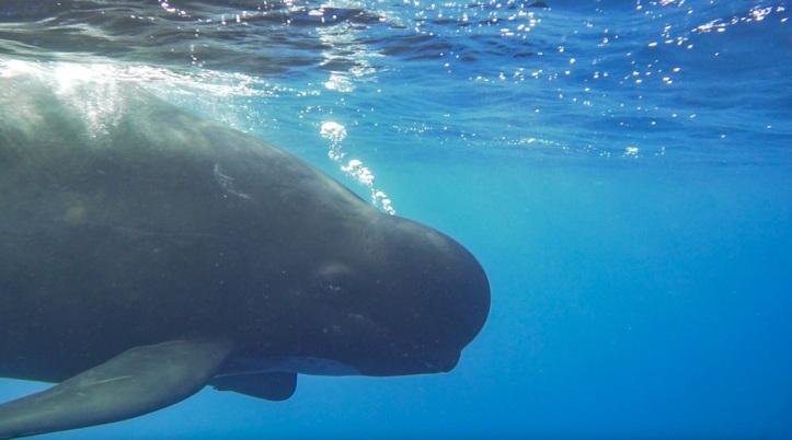 whalewatch.tours en tarifa