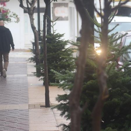 Árboles De Navidad Para Crear Conciencia Climática