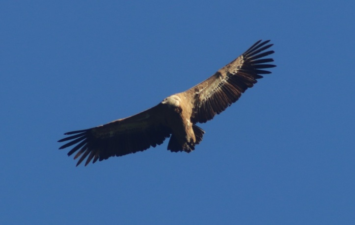 Que hacer en Tarifa Observar Aves en Tarifa