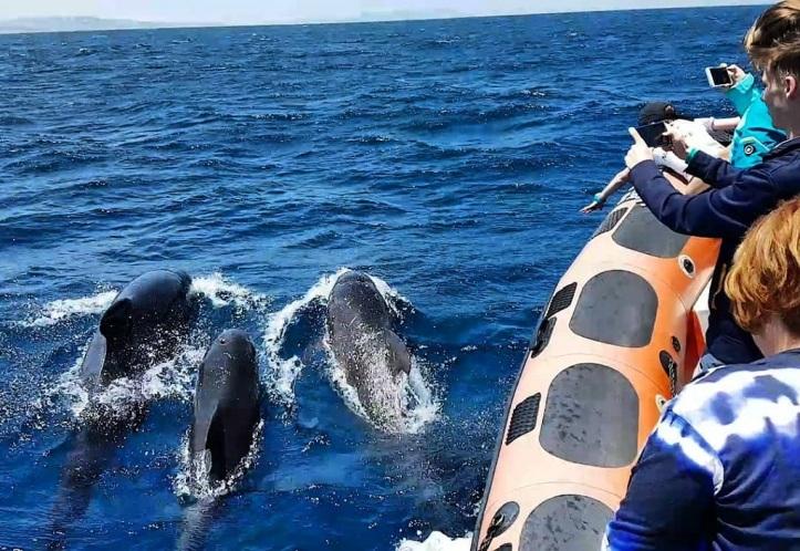 Que hacer en Tarifa. Avistamiento de ballenas y delfines con toptarifa
