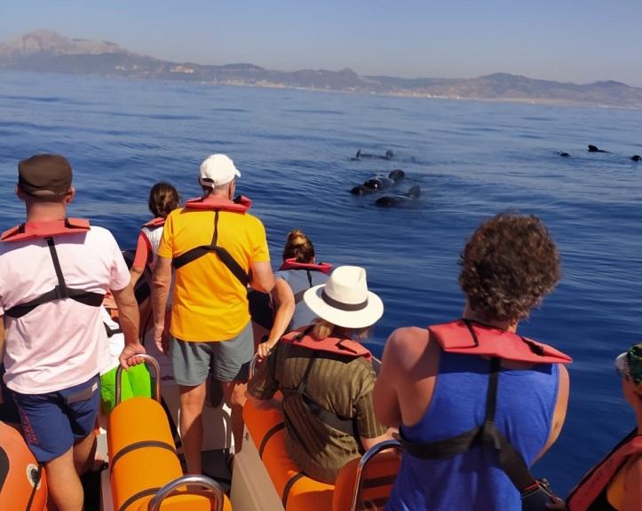 Avistamiento de ballenas en tarifa con toptarifa