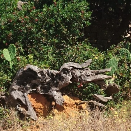 un elefante escupiendo un cocodrilo