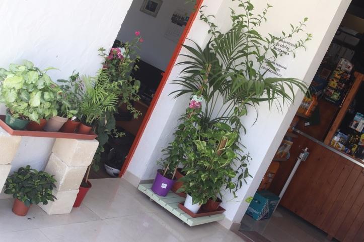 plantas de magimetran