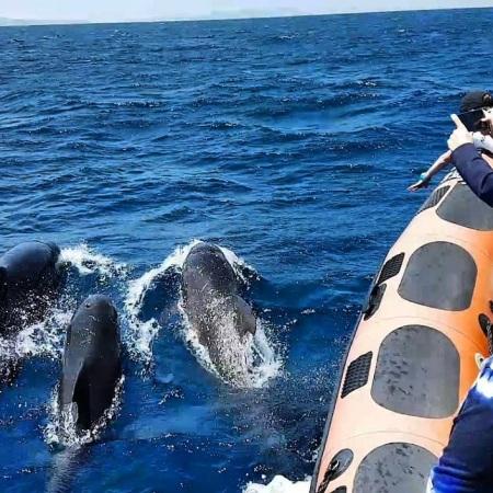 Realice un tour de avistamiento de ballenas en el estrecho de Gibraltar